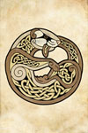 Celtic Ferret